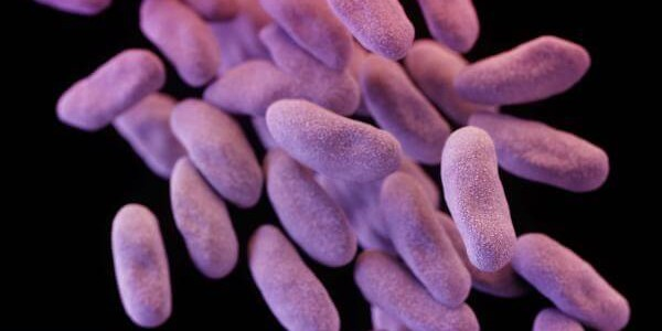 Study profiles US threat from drug-resistant bacteria